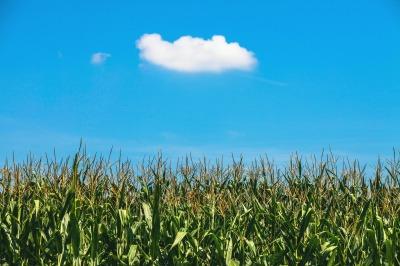 cornfield-438433_1920