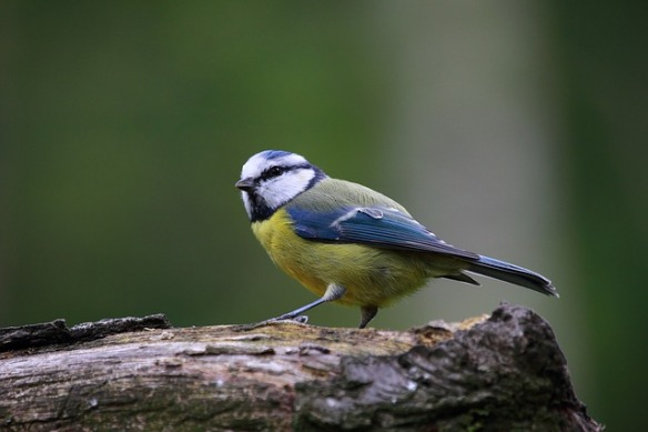 bird-915445_640