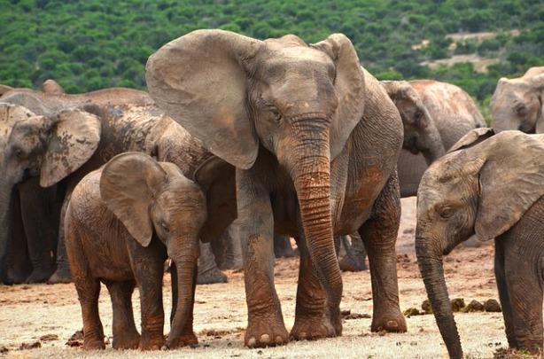 africa-1680412_640