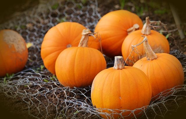 pumpkin-1679827_640