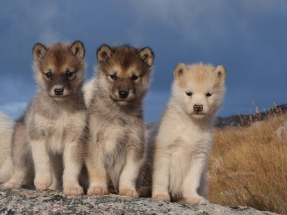 dogs-1646185_640