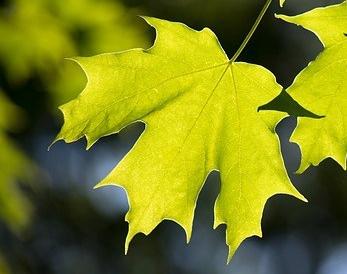 leaves-1853506_640