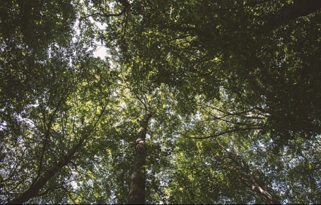 leaves-1866429_640.jpg