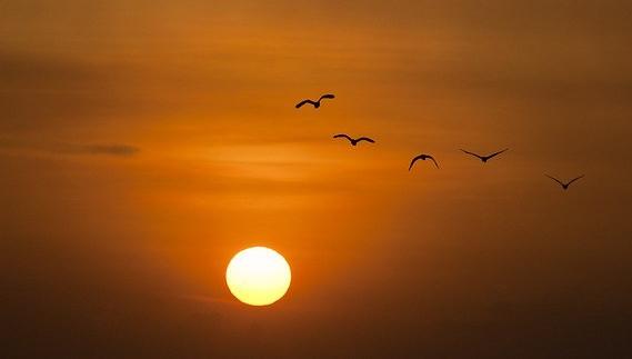 sunset-600095_640