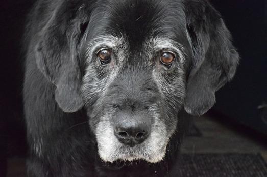 dog-2417805_640