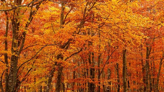 autumnal-leaves-2908275_640