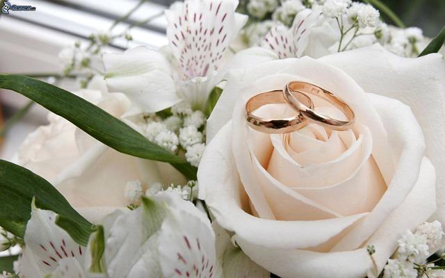 flower-3092423_640.jpg