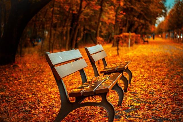 bench-560435_640.jpg