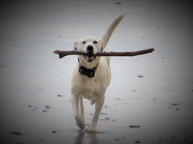 dog-1314808_640