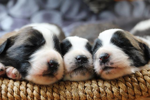 puppy-3607024_640