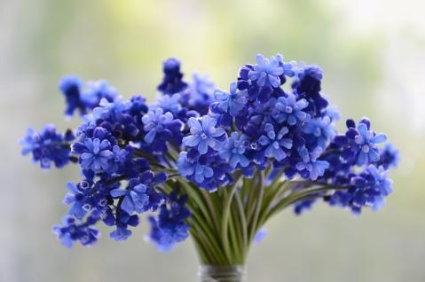 flowers-3453729_640