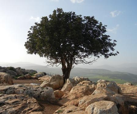 tree-189158_640