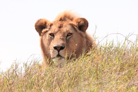 animal-animal-photography-big-615480