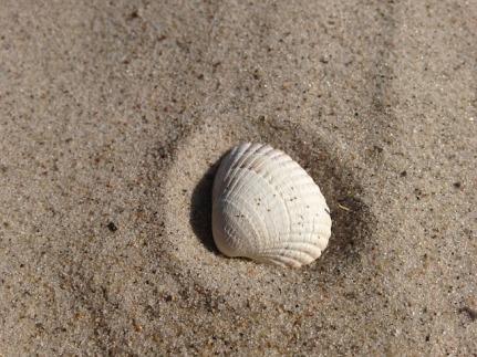 shell-812254_640
