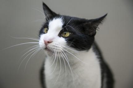 cat-2301015_640