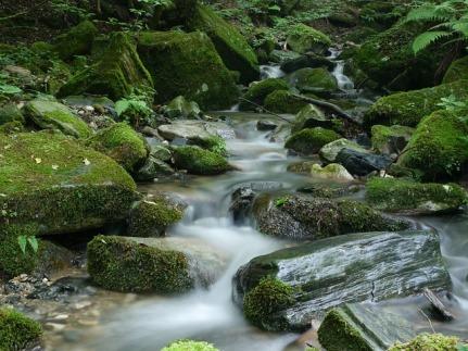 creek-919053_640.jpg