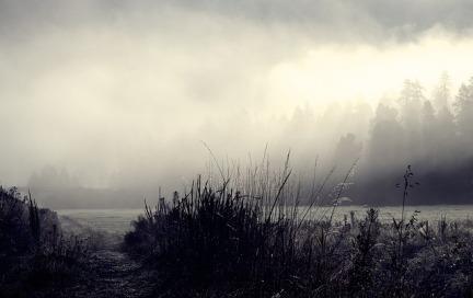 morning-mist-3713937_640