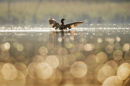 bird-1867066_640.jpg