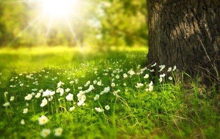 spring-276014_640-2