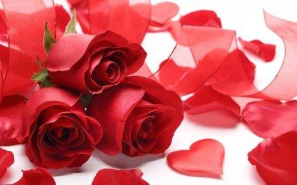 roses-2013498_640