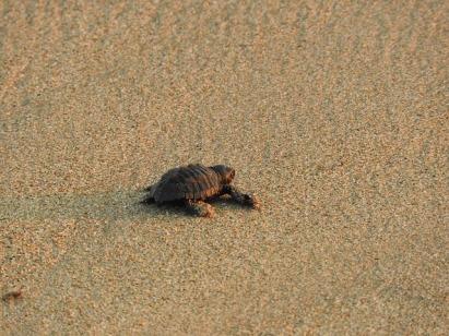 turtle-3589130_640