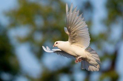 bird-3724869_640