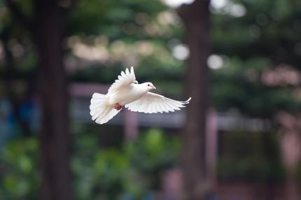 bird-4062359_640