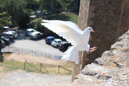 bird-465816_640