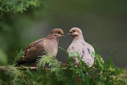 birds-3526907_640