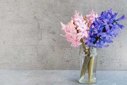 hyacinth-1354489_640