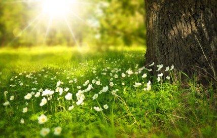 spring-276014_640-3
