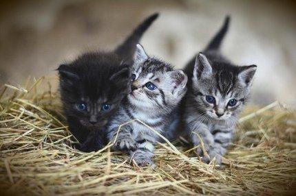 cat-3535404_640-2