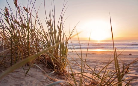 green-grass-on-sand-overlooking-body-of-water-1300510