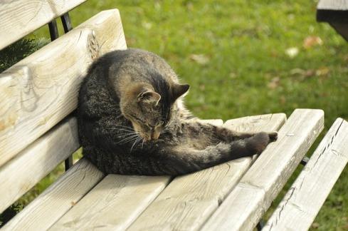 cat-694523_640